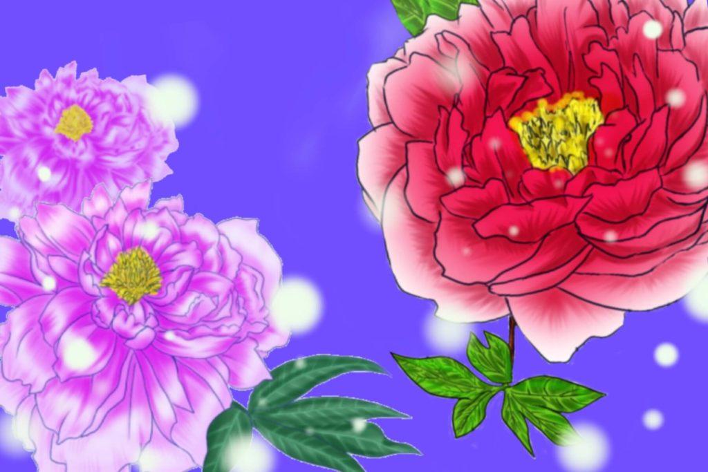 牡丹の花 Procreate